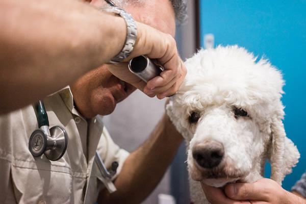 Dog Annual Health Checkup